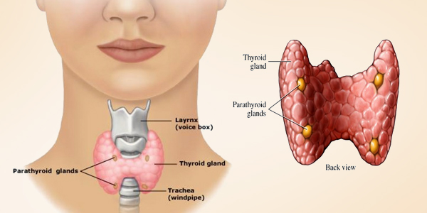 thyroid (1)